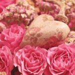Amarres de Amor con Rosas